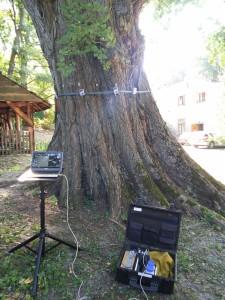 Badanie drzewa tomografem komputerowym